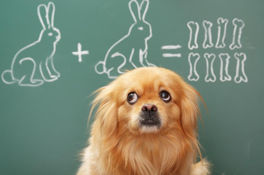 Subject Knowledge Enhancement (SKE) – Maths courses